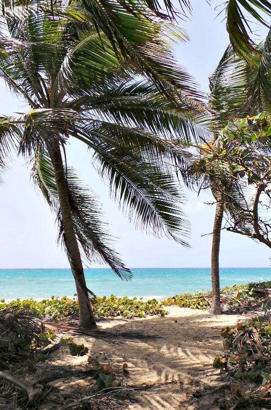 Hi Sugarplum | Vieques, PR