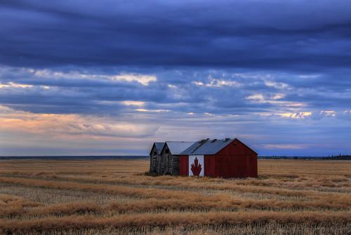 sky canada clouds nikon farm harvest alberta fields nikkor 18200 peaceriver canola valleyview peaceregion d300s