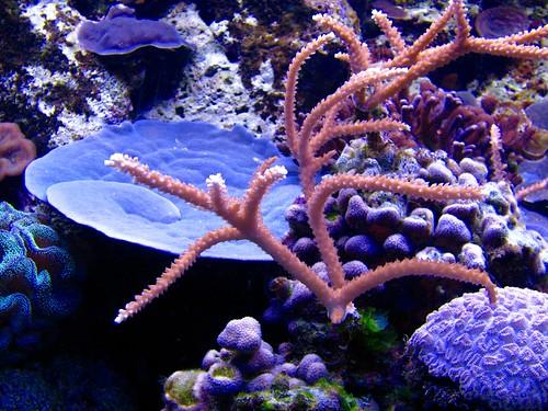 Acuario de Arrecife de Coral, Xcaret, México