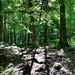Shenepsit Trail 2