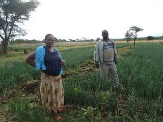 Vegetable irrigation in SNNP (Photo:ILRI\Tesfaye Dubale)