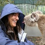 volunteers2 koala