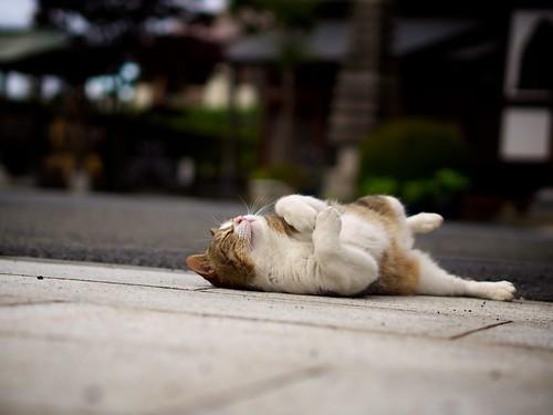 lying down cat