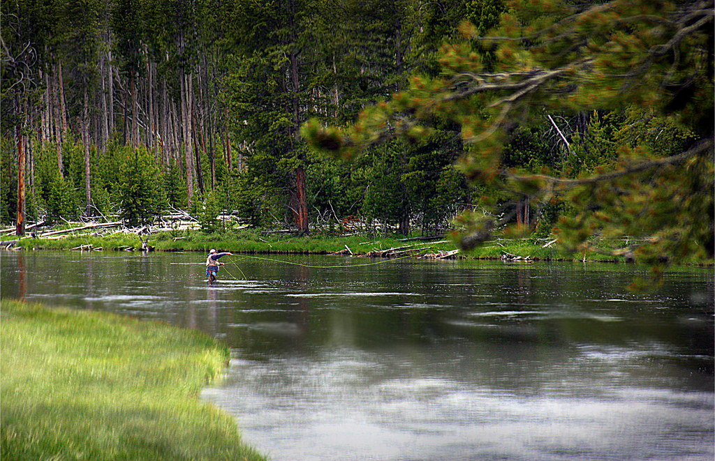 Fly fishing in yellowstone national park temperature rising for Yellowstone national park fishing