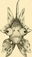 """Image from page 60 of """"Goldfish breeds and other aquarium fishes, their care and propagation : a guide to freshwater and marine aquaria, their fauna, flora and management. With 280 explanatory illustrations, printed with the text"""" (1908)"""