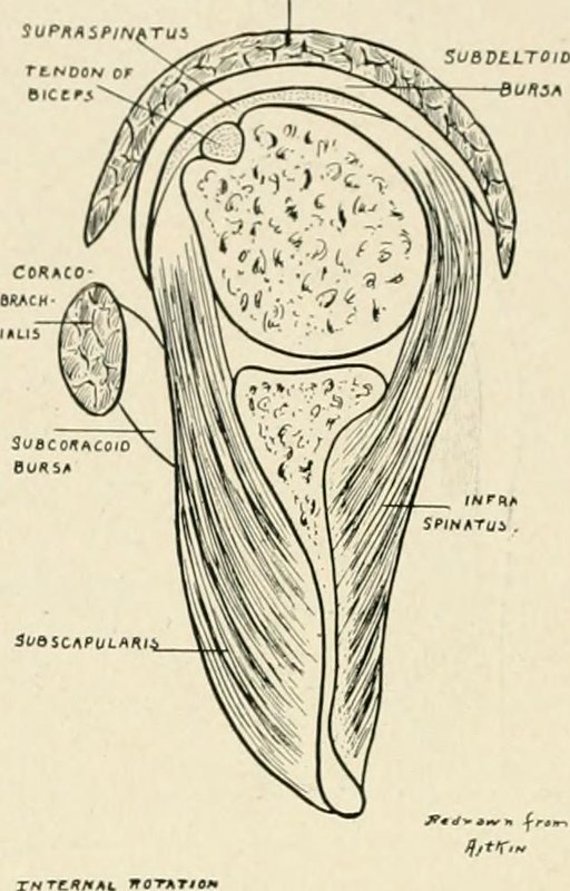 "Image from page 815 of ""The practice of surgery"" (1910)"