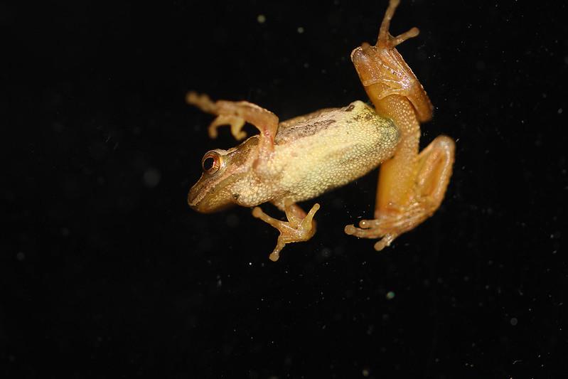 tree frog kitchen window