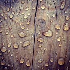 Morning dew #???? #????  #?? #dew #wood #??? #tr� #??? #????? #??????? #persian #arabic #persiska #arabiska