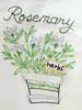 rosemary-2860