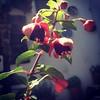 Küpeli flower #izmir#şirince#turkey#