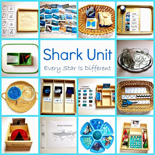Shark Unit with Free Printables (Photo from Every Star Is Different)