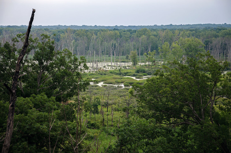 Wetland Below the Dune Ridge