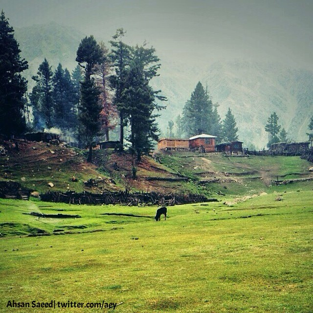 Another view of Fairy Meadows. Stayed 2 nights there.
