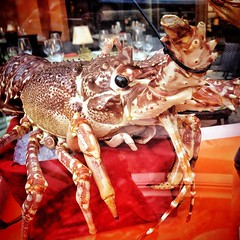 I couldn't bring myself to eat this lil'guy, but I'm sure someone else did. #lobster @WynnLasVegas