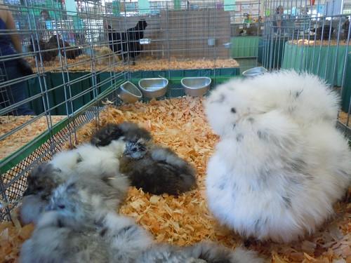 Chicken or rabbit? :)