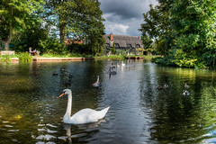Swans and The Granary, Flatford