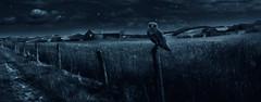 Nocturnes Op10