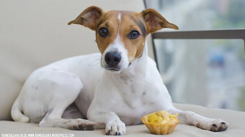 Magdalenas de manzana y miel para perros
