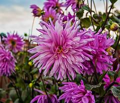 Pink Bridge Flowers