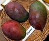 Mango  #247: EDGEHILL