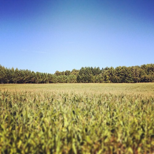 Corn field in Dordogne, France #corn #field #dordogne #france #mais #trees #bluesky #green