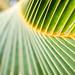 Hawaii 2014: Day 4 - palm
