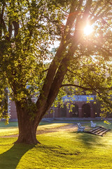 Morning Light Through the Tree at Saratoga Spa State Park