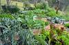 busy in the spring garden