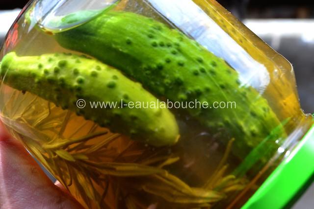 Cornichons en Bocal © Ana Luthi Tous droits réservés 006_GF