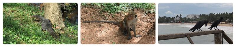 Guía Viajar Sri Lanka (2)