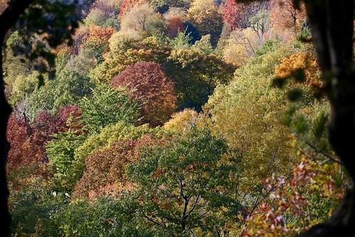 montreal montréal quebec québec canada autumn tree canopy
