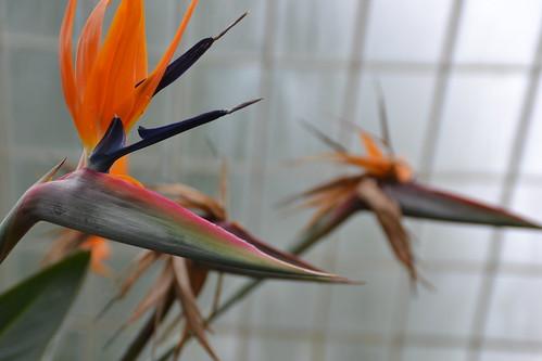 066 - Glasgow - jardins botaniques