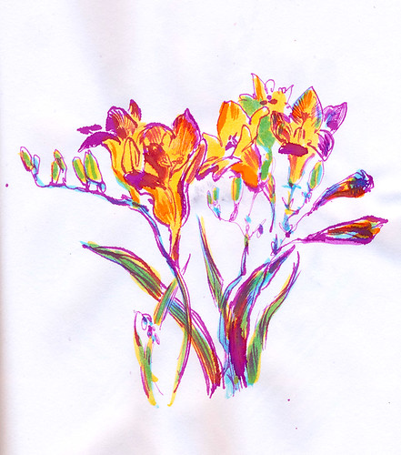 May 2014: Freesia