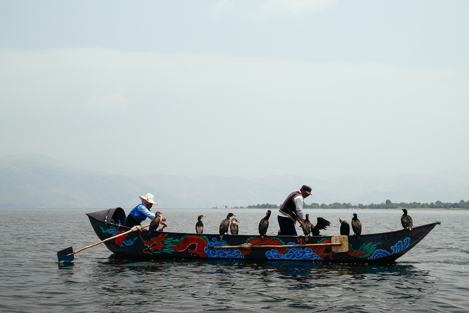 Dali - Cormorant Fishing on Erhai Lake