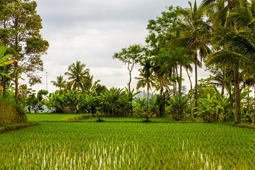 indonesia westnusatenggara pringgasela