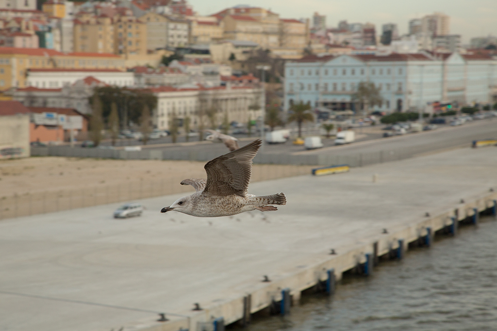 Lisbon docks 2014-01-10