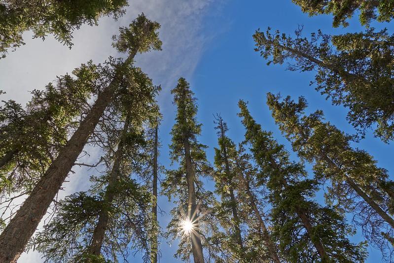Trees and the Sun - Yukon