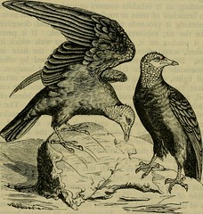 """Image from page 622 of """"Reptiles and birds : a popular account of their various orders, with a description of the habits and economy of the most interesting"""" (1883)"""
