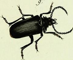 """Image from page 112 of """"Johann Euseb Voets Beschreibungen und Abbildungen hartschaaligter Insekten, Coleoptera Linn. Aus dem original Getreu übersetzt, mit der in selbigem fehlenden Synonymie und beständigen Commentar versehen"""" (1793)"""