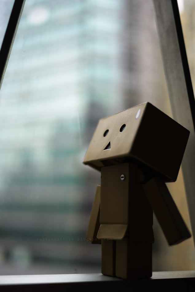 Danbo's rainy day
