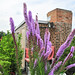 Small photo of Blazing Star Abuzz with Bees