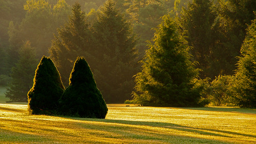 morning trees light summer mist green backlight dof maine wells golfcourse merrilandfarm