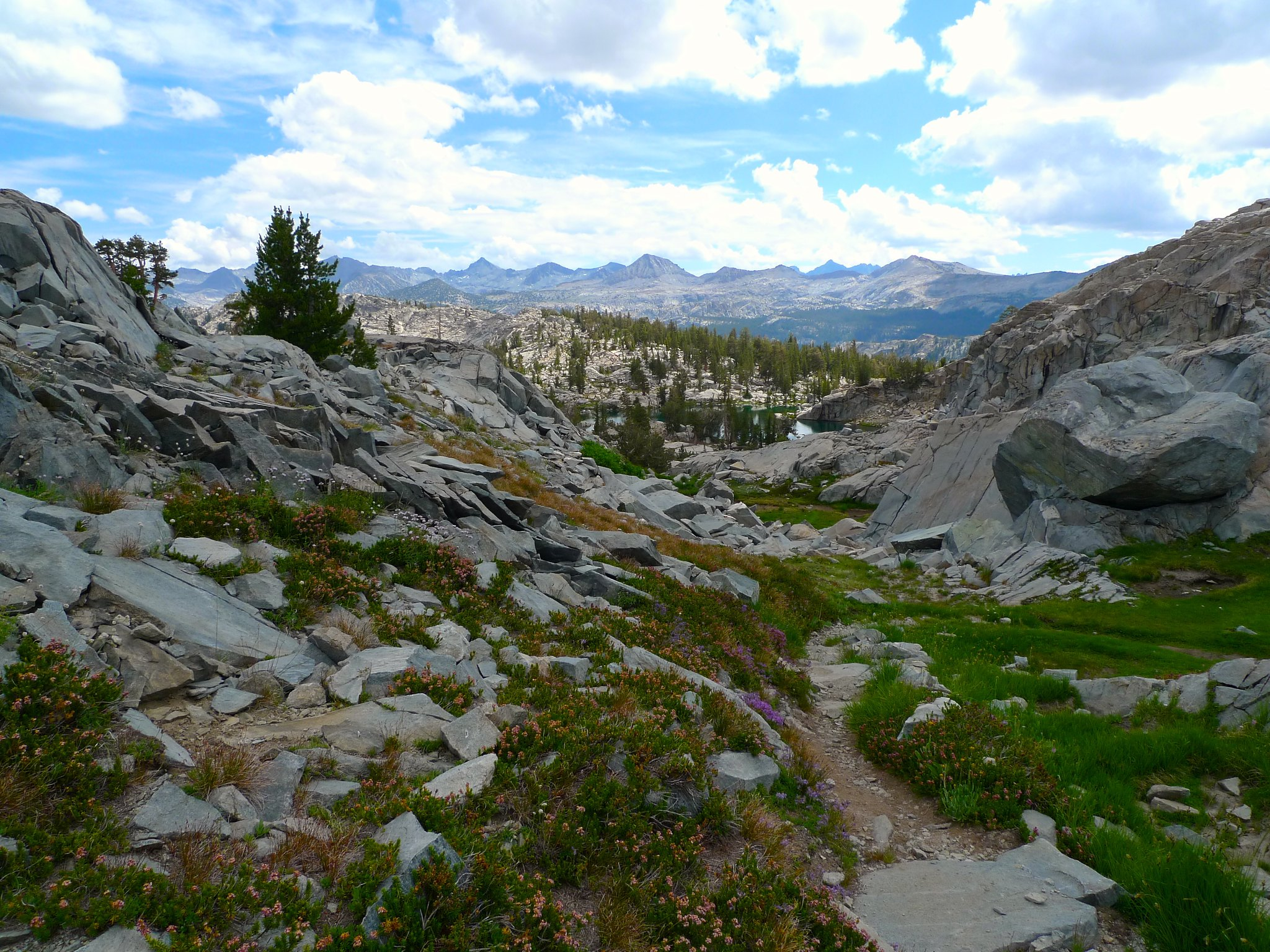 Wildflower bloom, tarns, and Yosemite high country