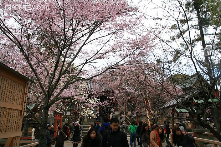 奈良公園-15