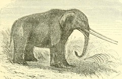 "Image from page 54 of ""The museum of natural history, with introductory essay on the natural history of the primeval world : being a popular account of the structure, habits, and classification of the various departments of the animal kingdom, quadrupeds,"