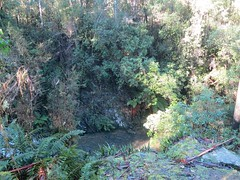 2014-08-10 Lilydale Falls 096 - Cliff