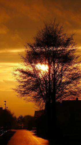 sun schweiz switzerland mood sonne stimmung 2007 afterglow abendrot rafz zürcherunterland