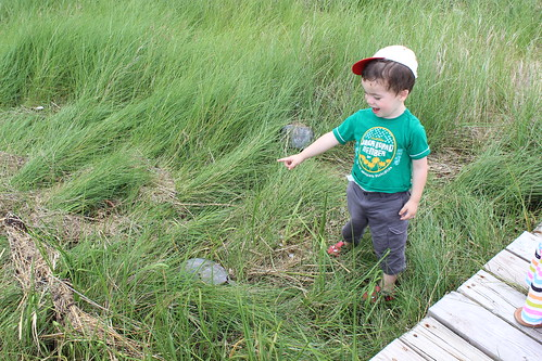 Bethany Beach - Fresh Pond - Prickley Pear Trail - Sagan Pretends Touch Dead Horseshoe Crab
