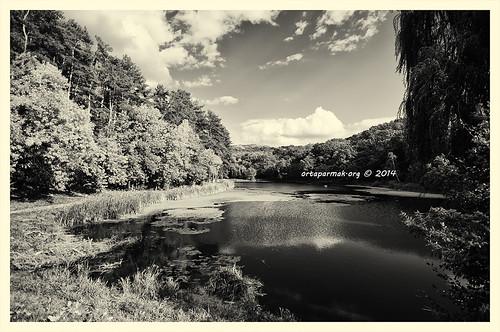 Pond in Golosievskiy Park BW