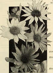 """Image from page 94 of """"Dreer's garden book 1915"""" (1915)"""